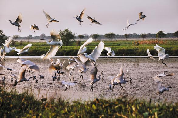 [自驾召集]南沙美食、湿地观鸟――玩转广州永乐两日自驾游