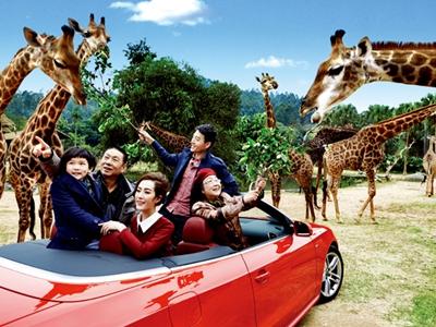 长隆野生动物世界_长隆野生动物世界门票价格