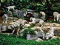 广州长隆野生动物世界图片
