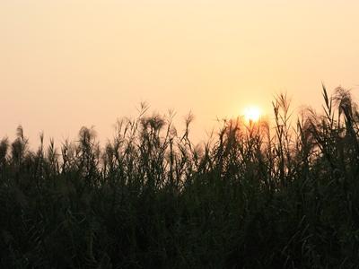 南沙湿地图片