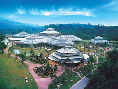 华南植物园图片