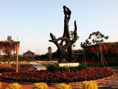 神木文化园图片