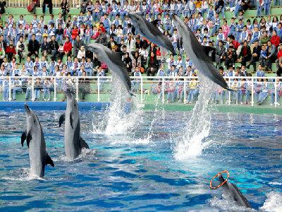 深圳深圳野生动物园