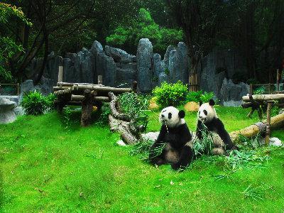 深圳深圳野生动物园图片