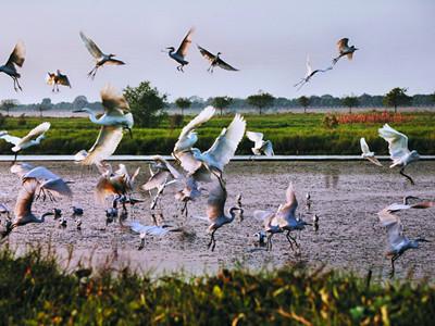 水鸟世界大门票+南沙湿地(大门+游船)套票图片