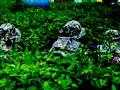 广州阳光农庄欢乐谷图片