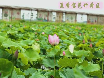 三水宝苞农场