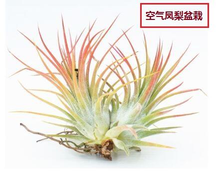 广州农缘农业植物系列